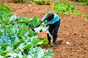 Africa New Life - Keyhole Gardens